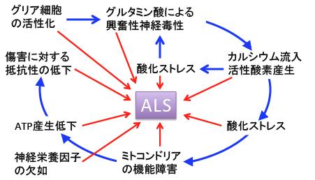 筋萎縮性側索硬化症(ALS)の代...
